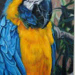 Sharon Reed's oil, Squawk