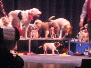 Rescue dogs of the Muttville Comix